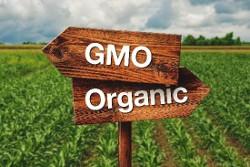 gmo/organic